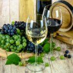 Cyklovýlety za vínem