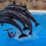 Navštivte na ostrově Tenerife Loro Park
