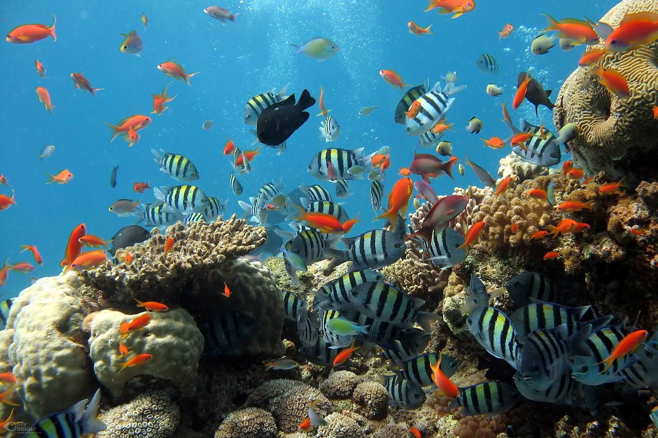 koralove utesy